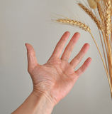 饥饿的人的手 免版税库存图片