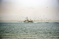 饥饿的海鸥围拢的渔船 免版税库存照片
