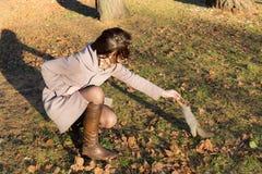 饥饿的灰鼠在秋天 库存图片