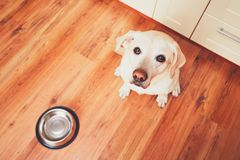 饥饿的狗等待的哺养 库存图片