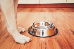 饥饿的狗等待的哺养 图库摄影