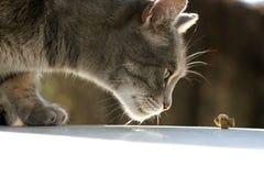 饥饿的猫 免版税图库摄影