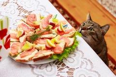 饥饿的猫 免版税库存照片