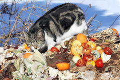 饥饿的猫 库存照片
