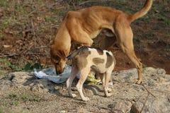 饥饿的街道dog& x27; s 库存照片