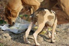 饥饿的街道dog& x27; s 库存图片