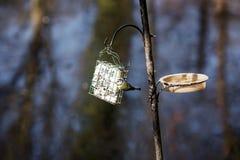 饥饿的鸟 免版税库存照片