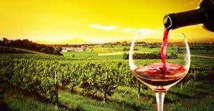 饮料在日落的葡萄园里 免版税库存图片