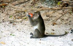 饮用的猴子 免版税库存图片