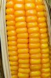 饲料玉米干燥在领域 库存图片