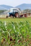 饲料玉米的种植园 免版税库存图片
