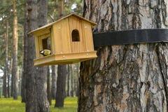 饲养者作为房子和а北美山雀 库存图片