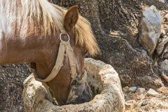 从饲养者杯子石头的Poniyu饮用水 库存照片