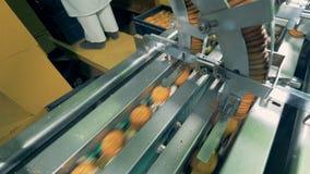 饼干由一个运转的工厂机器被完成 影视素材