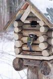 馈电线极大的房子坐小的山雀 免版税图库摄影