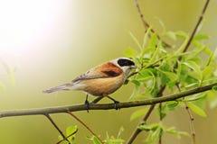 首先反弹小鸟雨和树叶子与晴朗的热点的 免版税库存照片