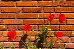 首先开花花在春天 免版税库存照片