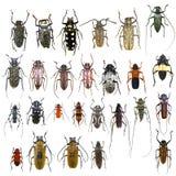 首饰甲虫的汇集 免版税库存图片