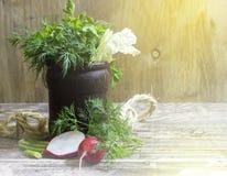 茴香和荷兰芹芬芳草本花束,在木背景,农村样式,选择聚焦 免版税库存图片