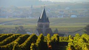 香宾葡萄园在近马恩省部门的Montagne de兰斯地区对Ville-Dommange, 股票视频