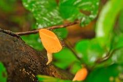 香宾蘑菇 免版税库存照片