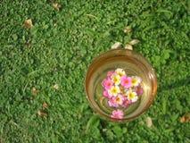 香宾,草甸,野花 免版税库存照片