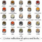 香料和草本的传染媒介汇集 库存图片