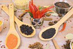 香料用在木背景的红辣椒用不同的沙粒 图库摄影