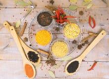 香料用在木背景的红辣椒用不同的沙粒 免版税图库摄影