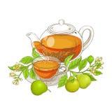 香柠檬茶传染媒介例证 库存图片