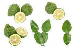 香柠檬非洲黑人石灰留给草本新鲜的成份被隔绝的集合 库存照片