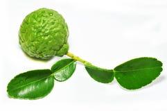 香柠檬 免版税库存图片