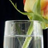 香槟槽玫瑰色正方形 库存图片