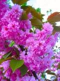 香水,桃红色和美丽的花 免版税库存图片