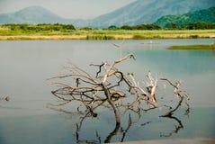 香港公园沼泽地 库存图片