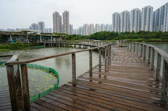 香港公园沼泽地 库存照片