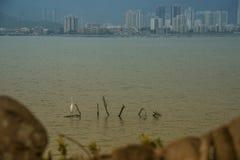 香港市视图白鹭 图库摄影