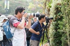 香港花卉展览 库存图片