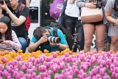 香港花卉展览 库存照片