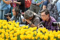 香港花卉展览 免版税库存照片