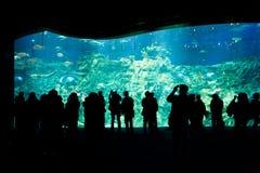 香港- 3月15 :观看大水族馆的人们在香港2012年3月15日的海洋公园 免版税库存照片