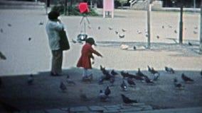 香港1973年:亚裔小孩男孩哺养的鸟,当母亲手表时 股票视频