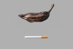 香烟原因凋枯香蕉 库存照片