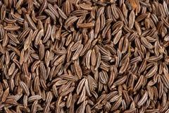 香芹籽接近的种子 免版税库存图片