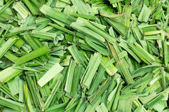 香茅干燥叶子 免版税库存照片