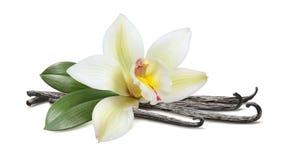 香草用在白色隔绝的叶子水平的荚 免版税库存图片