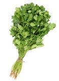 香菜叶子 免版税库存图片
