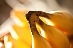 香蕉三 免版税库存照片