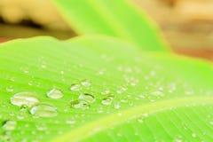 香蕉与纹理水下落的叶子样式在美好的早晨为与拷贝空间的背景增加文本 选择焦点shallo 免版税库存照片