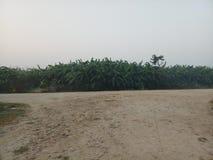 香蕉农场尼泊尔 库存图片